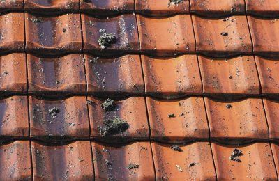 How to Prevent Moss Colonising Your Roof
